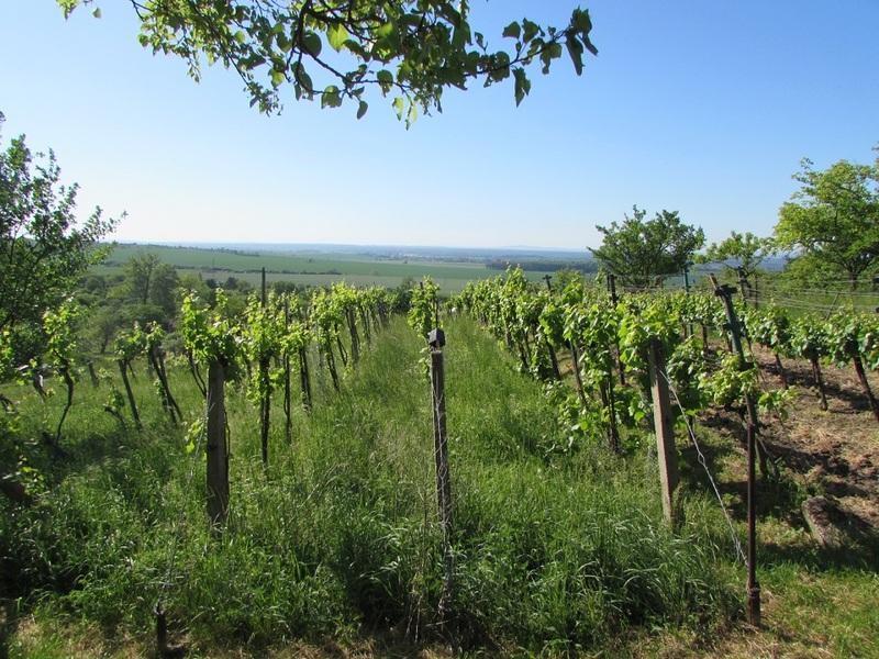 Prodej vinohradu