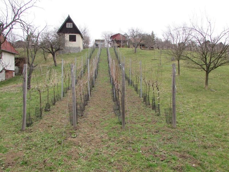 Prodej vinohradu v lokalitě Svárové